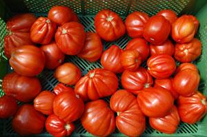 Tomate7