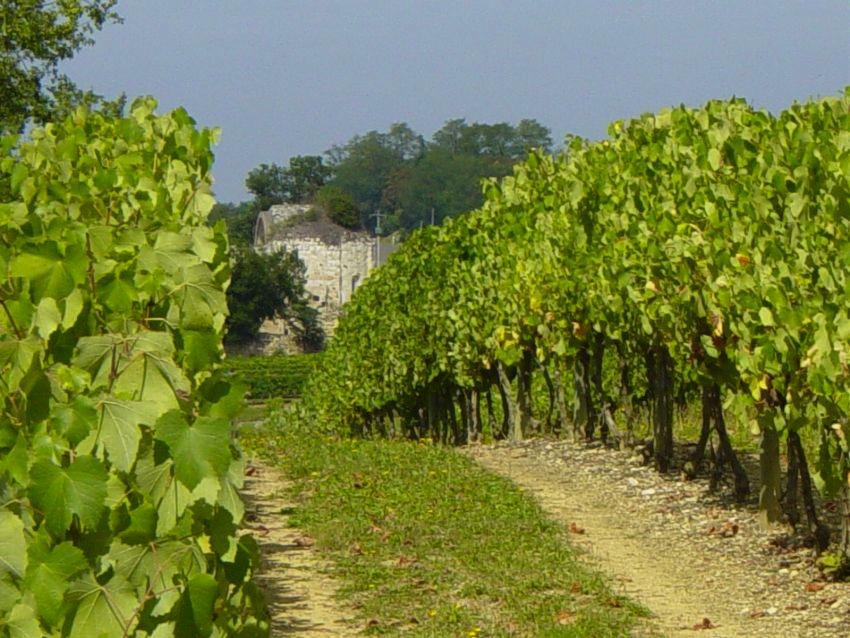 image of Domaine Saint-Lannes