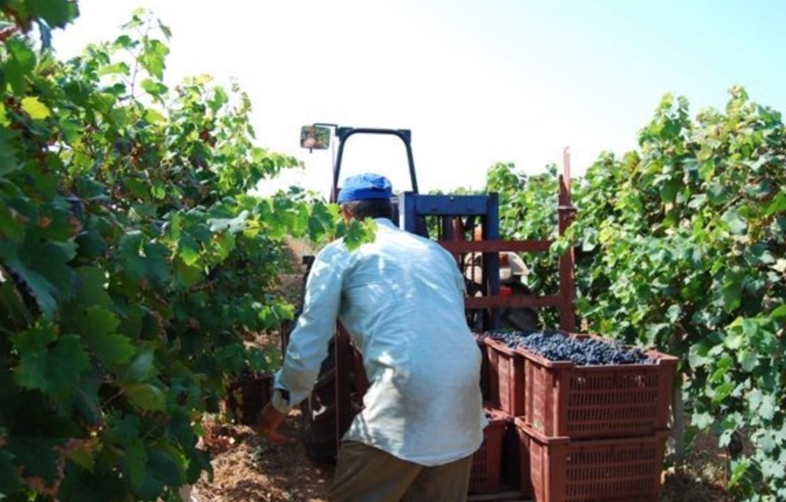 image of Produttori di Manduria
