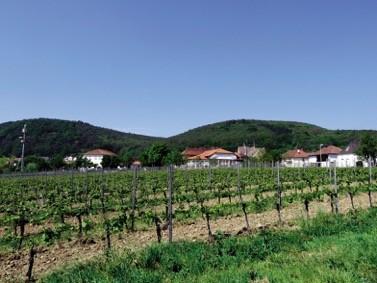 image of Weinland Königsbach- Neustadt