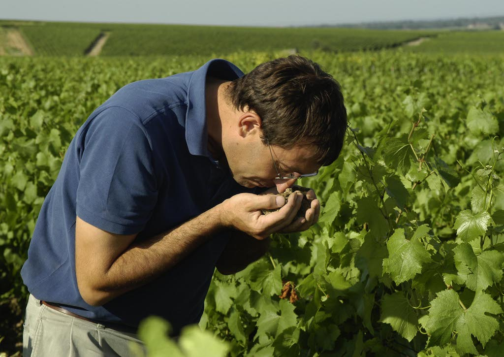 image of Champagne Larmandier-Bernier