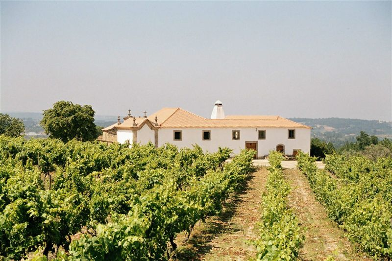 image of Fento Wines
