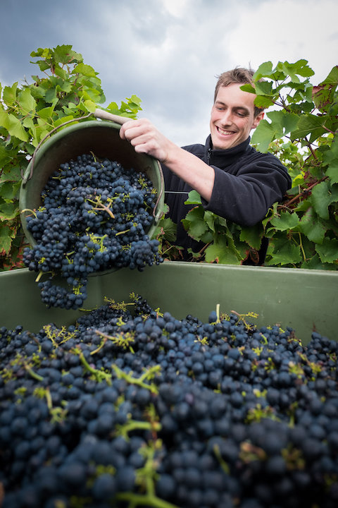 image of Weingut Eimermann